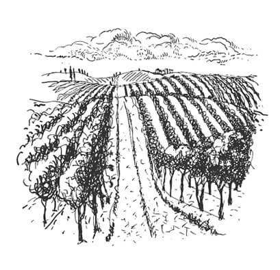 Wine tours and Experiences - Winery Kovačević